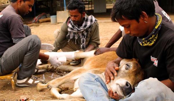 Animal Aid United