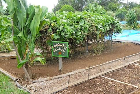 Haliimaile Community Garden