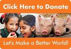 AWFW Donation Banner